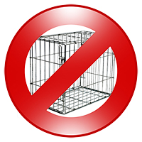 Cage Free Dog Boarding